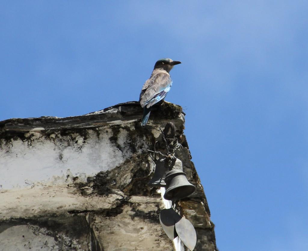 Raf heeft een liefde voor vogels ontwikkeld in Bhutan.