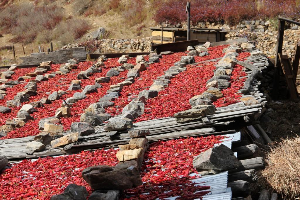 Overal waar je komt liggen de pepers op de daken te drogen in de zon.